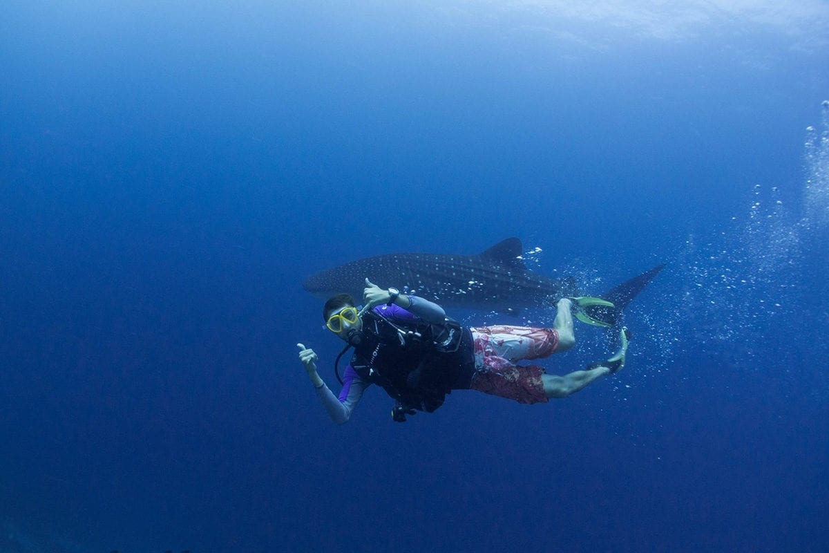 10 Useful Tips You Should Know Before Your Diving Holiday In The Maldives